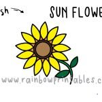 How To Draw a Sunflower 🌻 - Step by Step for Kids