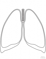human lungs coloring page