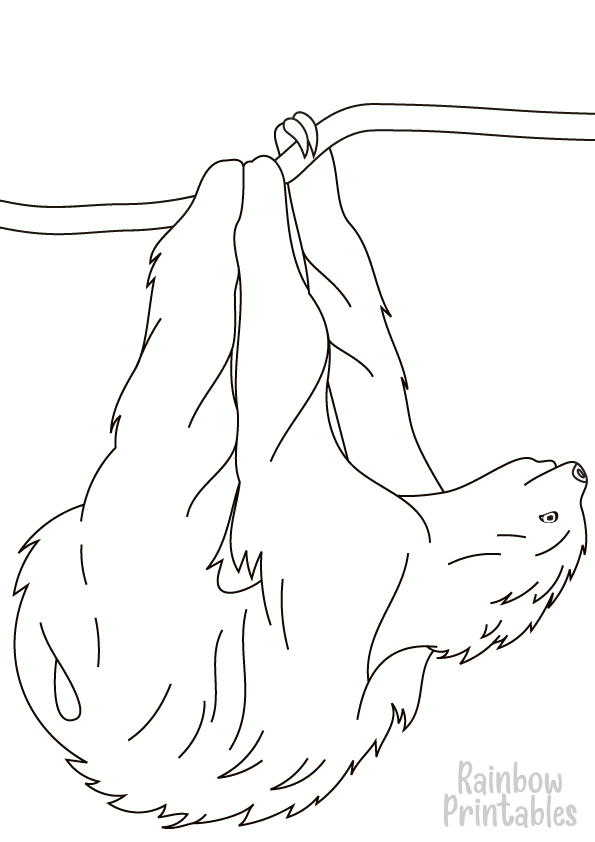 sloth hanging on branch coloring page