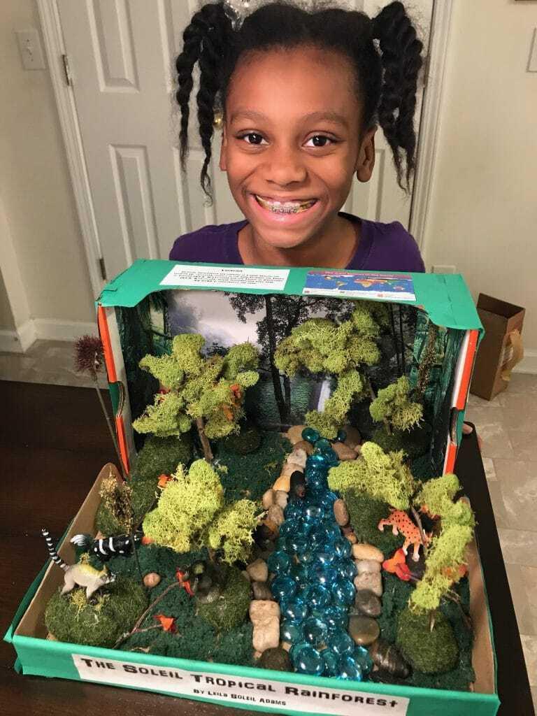 DIY Tropical Rainforest Diorama