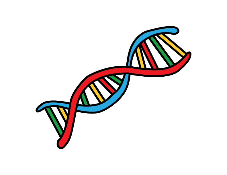 How To DNA (Deoxyribonucleic Acid) For Kids – Step By Step STEM Art Guide