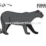 How To Draw a Puma/Mountain Lion/Cougar! Easy Cartoon Drawing Guide for Kids