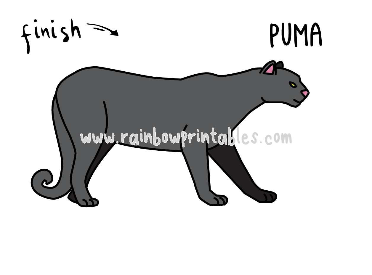 HOW TO DRAW EASY FOR KIDS STEP BY STEP BLACK PUMA ANIMAL COUGAR ANIMAL CAT Final