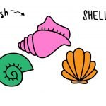 How To Draw Colorful Seashells - Easy Simple Cartoon Guide for Kids